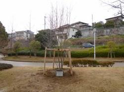 yamabosi2.jpg